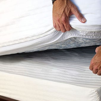 bed bug on the side and inner mattress cover