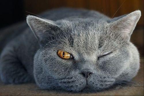 Open eye nap cat