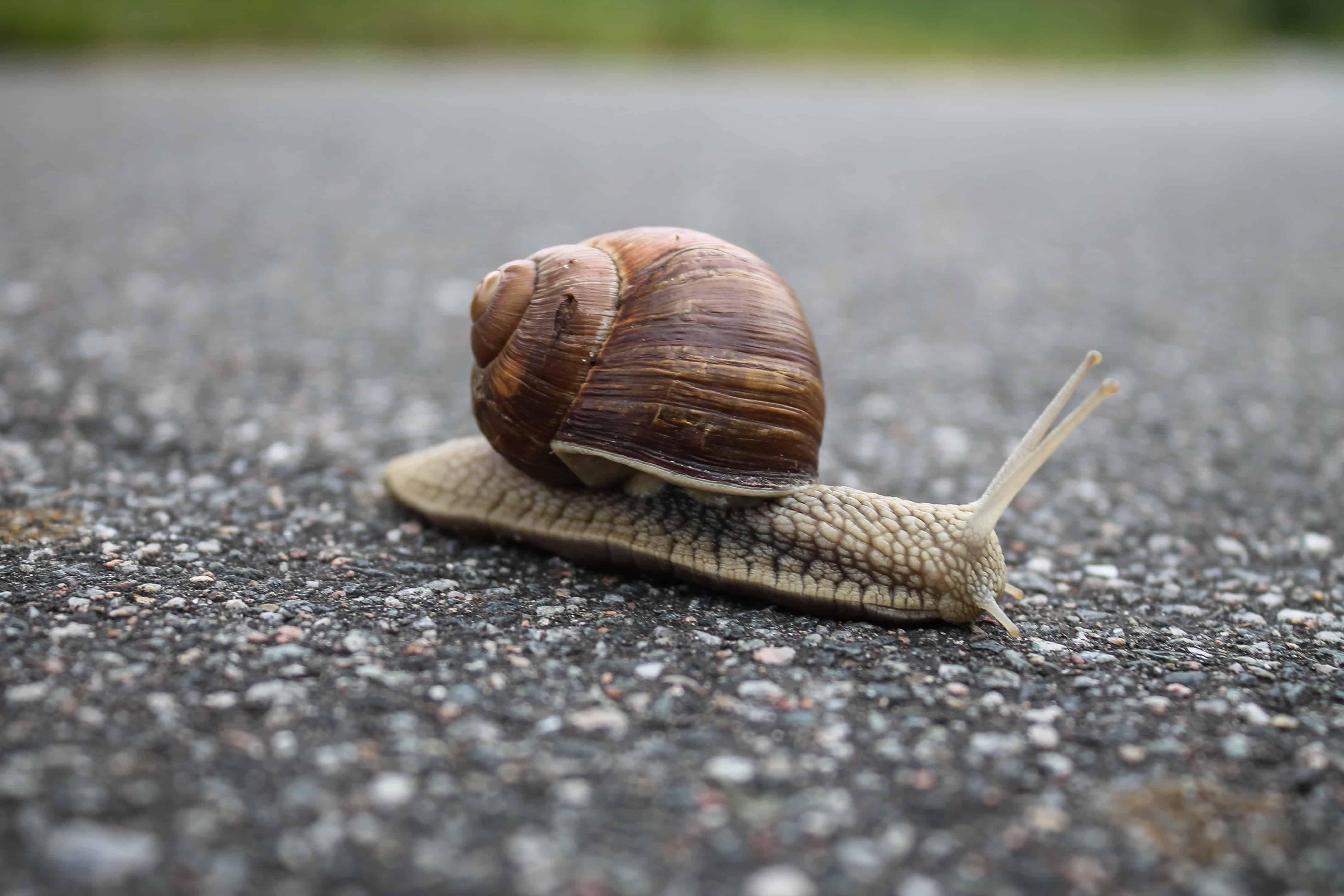 snails sleep
