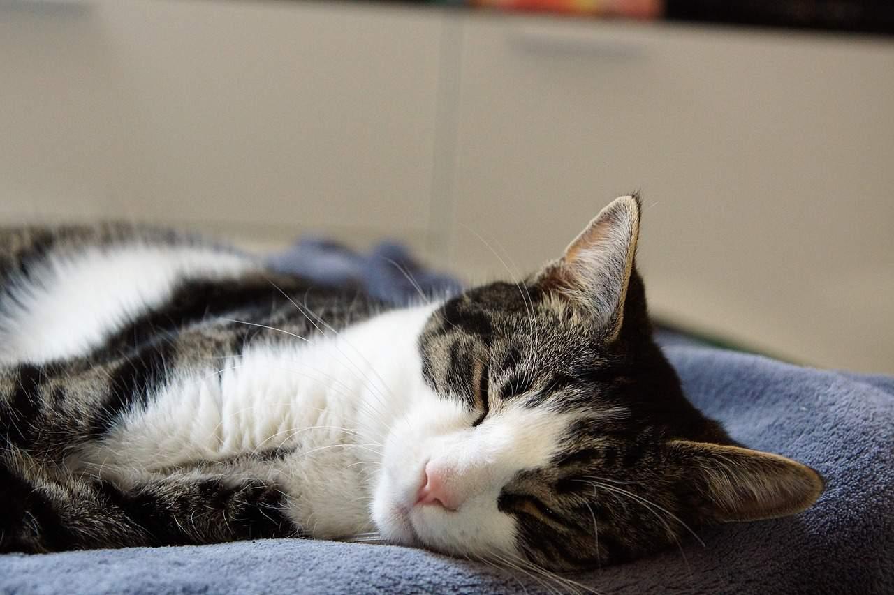 cat sleep so much