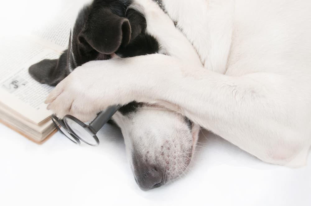 dog tired from reading book